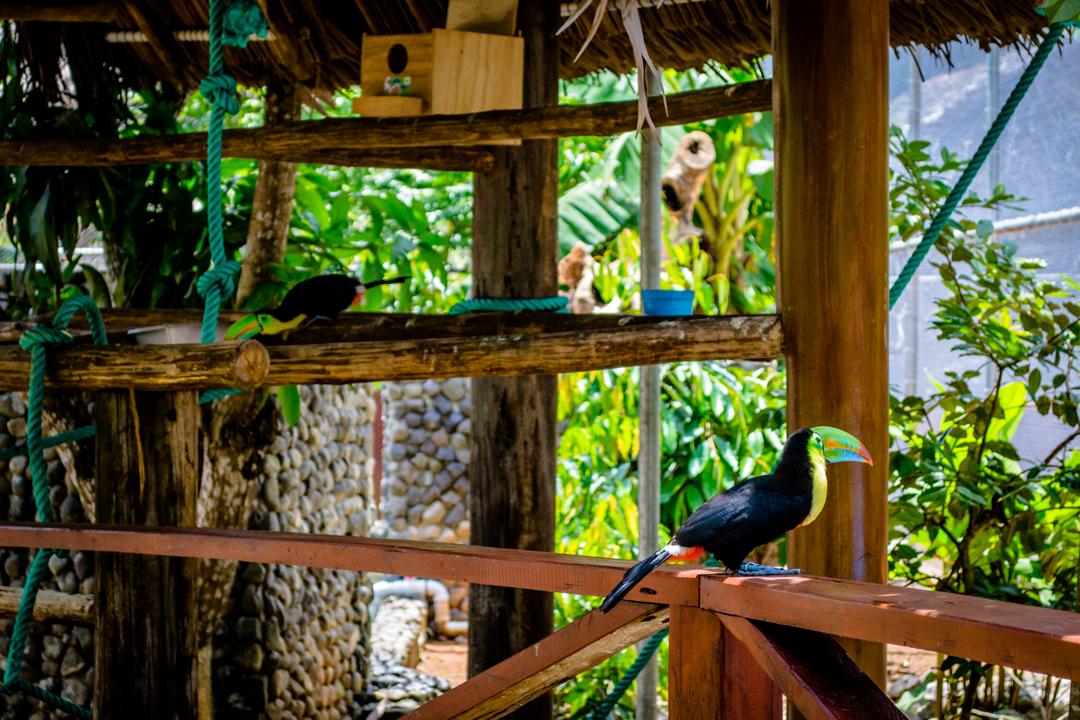 5 Reasons to Visit Panama's Costa Arriba